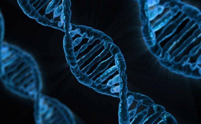 Οι επιστήμονες χαρτογραφούν τα γονίδια των ειδών πολύπλοκης ζωής