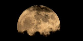 Δεν άντεξαν το κρύο τα πρώτα φυτά που φύτρωσαν στο φεγγάρι