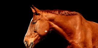 Θεσπρωτία: Πυροβολούν και σκοτώνουν άλογα - Αναζητούν τους δράστες
