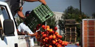 ΠΚΜ: «Οι ροδακινοπαραγωγοί της Πέλλας πρέπει να αποζημιωθούν με δίκαιο τρόπο»