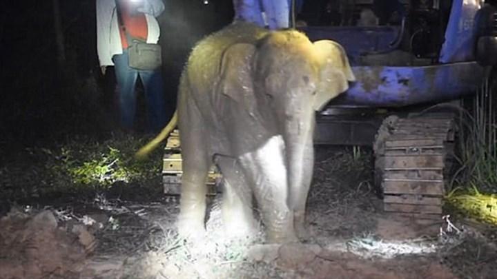 Σώθηκε ελεφαντάκι που εγκλωβίστηκε σε πηγάδι τριών μέτρων