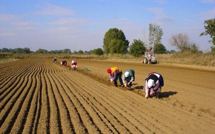 Έρευνα: Αντιμέτωποι με τη φτώχεια οι Έλληνες αγρότες