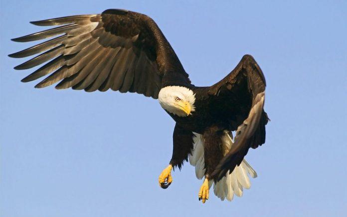 έκπληκτος με μεγάλο πουλί