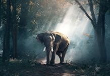 Ν. Αφρική: Πάνω από 100.000 υπογραφές για απελευθέρωση ελεφαντίνας