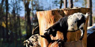 Κραυγή αγωνίας από κτηνοτρόφους και κρεοπώλες