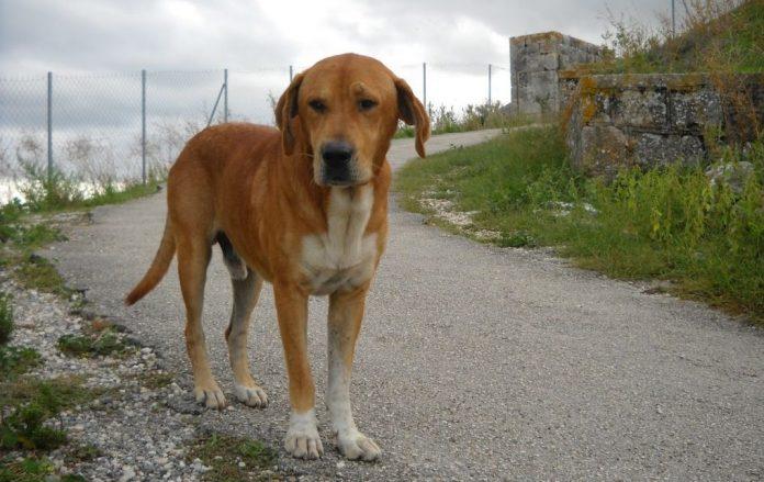 Αθήνα: Άνδρας έσφαξε σκύλο με 17 μαχαιριές