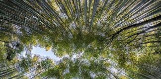 Νέες αναρτήσεις δασικών χαρτών σε Αν. και Δυτ. Αττική, Δράμα, Κυκλάδες και Κοζάνη