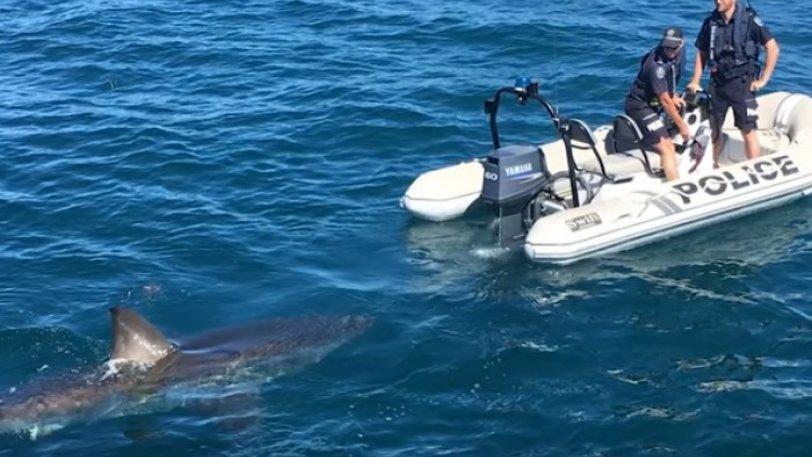 Απείθαρχος καρχαρίας εμπόδισε αστυνομικούς να κάνουν... αλκοτέστ!