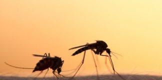 Ραγδαία μείωση των εντόμων σε ολόκληρο τον κόσμο