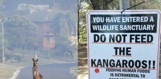 Ακόμη μία επίθεση καγκουρό σε τουρίστες προκαλεί αντιδράσεις!