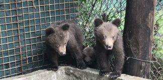 Ξύπνησαν οι αρκούδες στο Νυμφαίο με την άνοδο της θερμοκρασίας