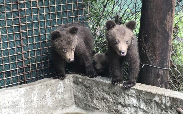 Καστορία: Βρέθηκαν 2 αρκουδάκια θαμμένα σε αγρόκτημα