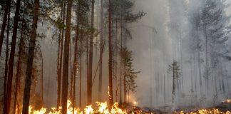 Υψηλός ο κίνδυνος πυρκαγιάς τη Δευτέρα στην Αττική