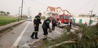 Πτώσεις δένδρων στη Θεσσαλονίκη