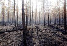 Ρωσία: Κρύφτηκαν στο δάσος για να σωθούν από τον κορονοϊό