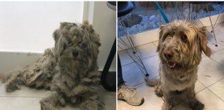 Μάτι: Υιοθετήθηκε το σκυλάκι που βρέθηκε σε φούρνο