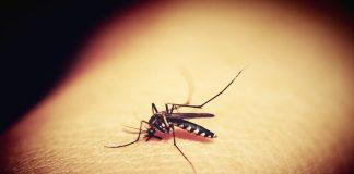 Δύο νεκροί από τον ιό του Δυτικού Νείλου