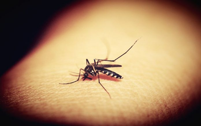 Άλλοι δύο νεκροί από τον ιό του Δυτικού Νείλου