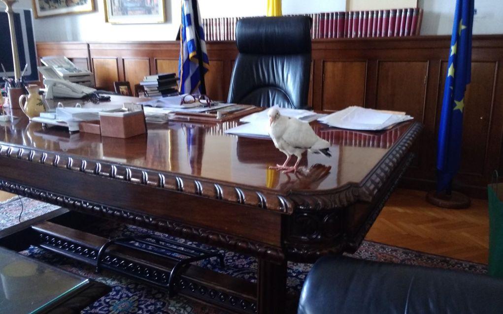 Έναν… απρόσκλητο επισκέπτη δέχτηκε το γραφείο της νέας υφυπουργού Μακεδονίας – Θράκης, Κατερίνας Νοτοπούλου.