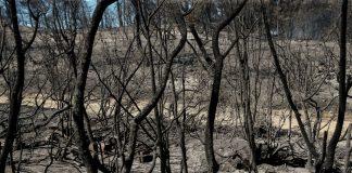 Εύβοια: Δορυφορική καταγραφή για την πύρινη καταστροφή