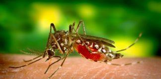 Κι άλλος νεκρός από τον ιό του Δυτικού Νείλου