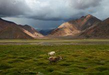 Το Θιβέτ ήταν τροπική περιοχή πριν εκατ. χρόνια σύμφωνα με νέα έρευνα