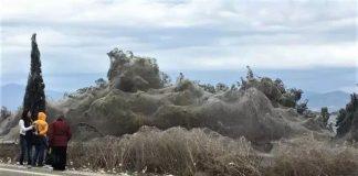 Δέος: «Πέπλο» αράχνης σκεπάζει το Πόρτο Λάγος στην Ξάνθη! (pic)