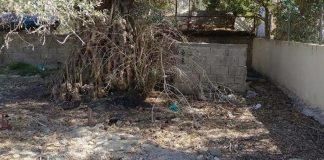 Άγνωστοι έκαψαν ζωντανό έναν σκύλο στην Κρήτη