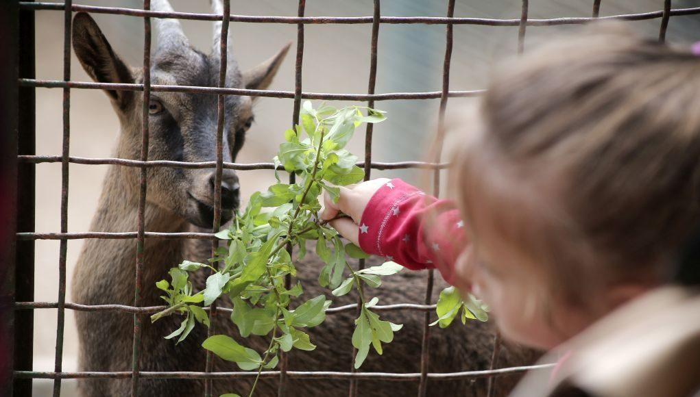 Η 4η Οκτωβρίου Παγκόσμια Ημέρα των Ζώων - Politik.gr