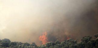 Πυρκαγιά σε δασική έκταση στη Ζάκυνθο