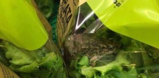 Η αλήθεια για τη φωτογραφία με το βάτραχο που βρέθηκε σε σαλάτα