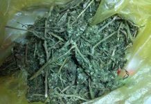 Θεσπρωτία: Έκρυβε σε... θάμνους 57 κιλά χασίς αλλά τον «τσάκωσαν»