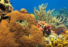 Στην Ιταλία ο πρώτος κοραλλιογενής ύφαλος στη Μεσόγειο