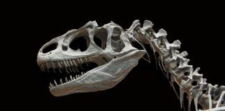 Πωλείται… δεινόσαυρος