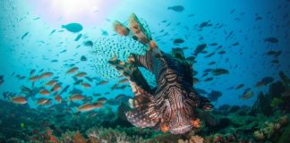 Κίνδυνος να εξαφανιστεί το 17% των θαλάσσιων ζώων ως το 2100!
