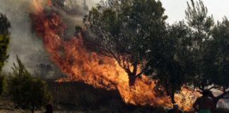 Υπό μερικό έλεγχο η φωτιά στην Εύβοια - Σε εξέλιξη στην Αργολίδα