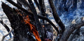Στις φλόγες η Ζάκυνθος: Πάνω από 10 χλμ το μέτωπο