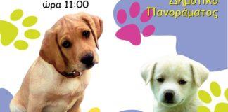 Γιορτή υιοθεσίας για τα αδέσποτα ζώα στο Πανόραμα