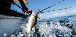 Μείωση έντασης της αλιείας στο 50%  θα εξασφαλίσει σε 10 χρόνια τριπλάσια εισοδήματα στους επαγγελματίες ψαράδες, σύμφωνα με μελέτη