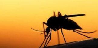 Συνεχίζονται οι δράσεις αντιμετώπισης του ιού του Δυτικού Νείλου