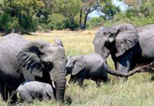 Καμπότζη: Απαγορεύτηκαν οι βόλτες με ελέφαντες στην περιοχή Άνγκορ