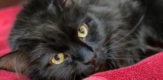 Μετά από πέντε χρόνια, 1.900 χλμ. μακριά, άνδρας βρήκε τον γάτο του