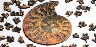 Ορυκτά απολιθώματα σε μορφή παζλ