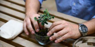 PlantBox: Το μικροσκοπικό ελαιόδεντρο που ταξιδεύει σε όλον τον κόσμο