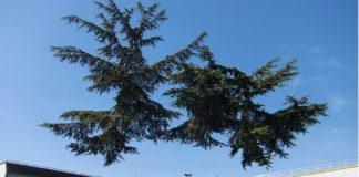 «Πυροτεχνήματα», δέντρα που ξεφυτρώνουν από τον αέρα