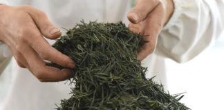 Life: 'Tea Museum', για τη χαρά της απόλαυσης του τσαγιού