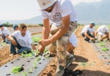 Ευοίωνες οι προοπτικές ανάπτυξης στην καλλιέργεια στέβιας
