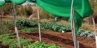 Ο λαχανόκηπος της «παρέας»