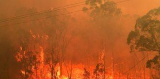Ένα δισεκατομμύριο ζώα νεκρά από τις φωτιές στην Αυστραλία