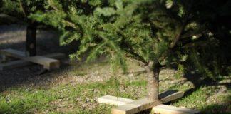 Μετά τα Θεοφάνεια ξεκινά η ανακύκλωση των φυσικών χριστουγεννιάτικων δέντρων